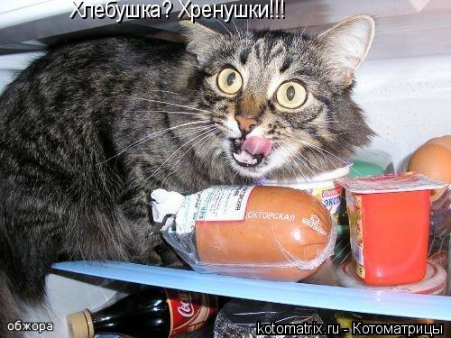 Котоматрица: Хлебушка? Хренушки!!!