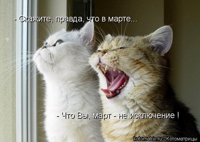 Котоматрица: - Скажите, правда, что в марте... - Что Вы, март - не исключение !