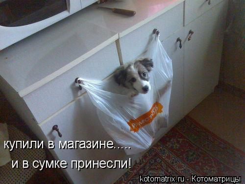 Котоматрица: купили в магазине..... и в сумке принесли!