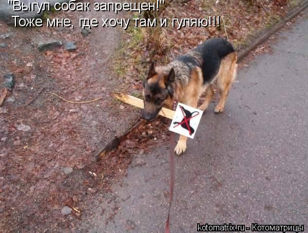 """Котоматрица: """"Выгул собак запрещен!"""" Тоже мне, где хочу там и гуляю!!!"""