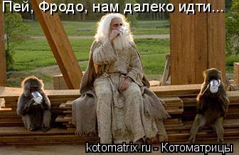 Котоматрица: Пей, Фродо, нам далеко идти...