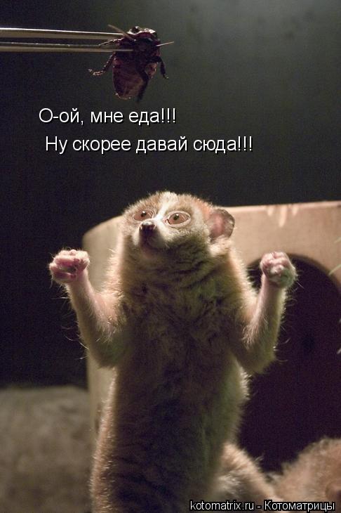Котоматрица: О-ой, мне еда!!! Ну скорее давай сюда!!!