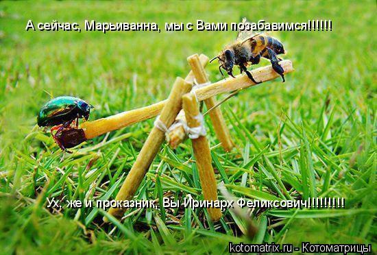 Котоматрица: А сейчас, Марьиванна, мы с Вами позабавимся!!!!!! Ух, же и проказник, Вы Иринарх Феликсович!!!!!!!!!
