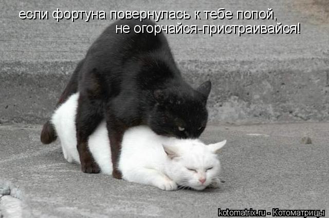 Котоматрица: если фортуна повернулась к тебе попой, не огорчайся-пристраивайся!