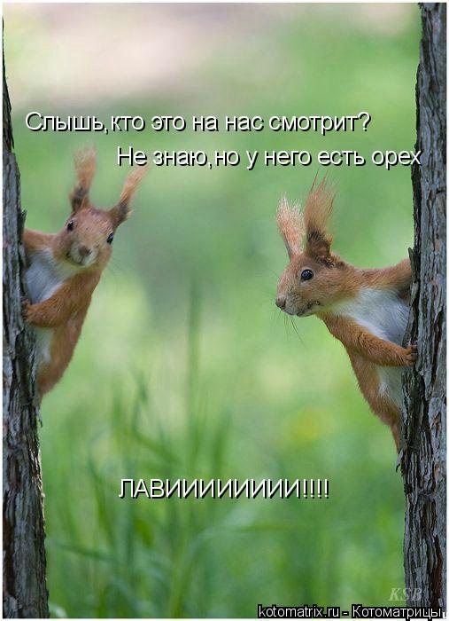 Котоматрица: Слышь,кто это на нас смотрит? Не знаю,но у него есть орех ЛАВИИИИИИИИ!!!!