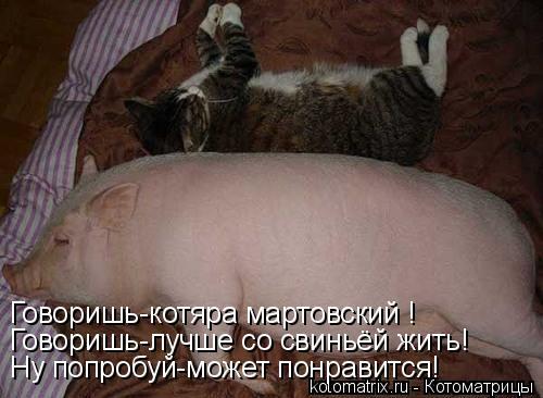 Котоматрица: Говоришь-котяра мартовский ! Говоришь-лучше со свиньёй жить! Ну попробуй-может понравится!