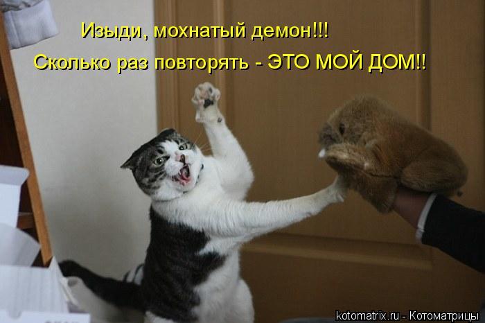 Котоматрица: Изыди, мохнатый демон!!! Сколько раз повторять - ЭТО МОЙ ДОМ!!