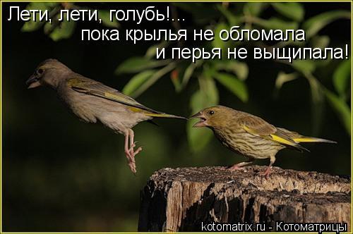 Котоматрица: Лети, лети, голубь!... пока крылья не обломала и перья не выщипала!