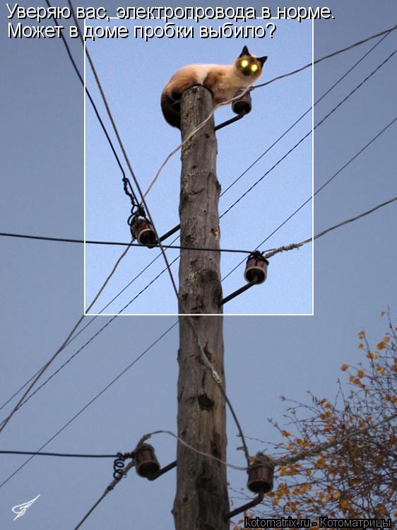 Котоматрица: Уверяю вас, электропровода в норме. Может в доме пробки выбило?