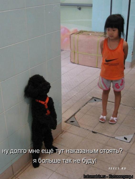 Котоматрица: ну долго мне ещё тут наказаным стоять? я больше так не буду!