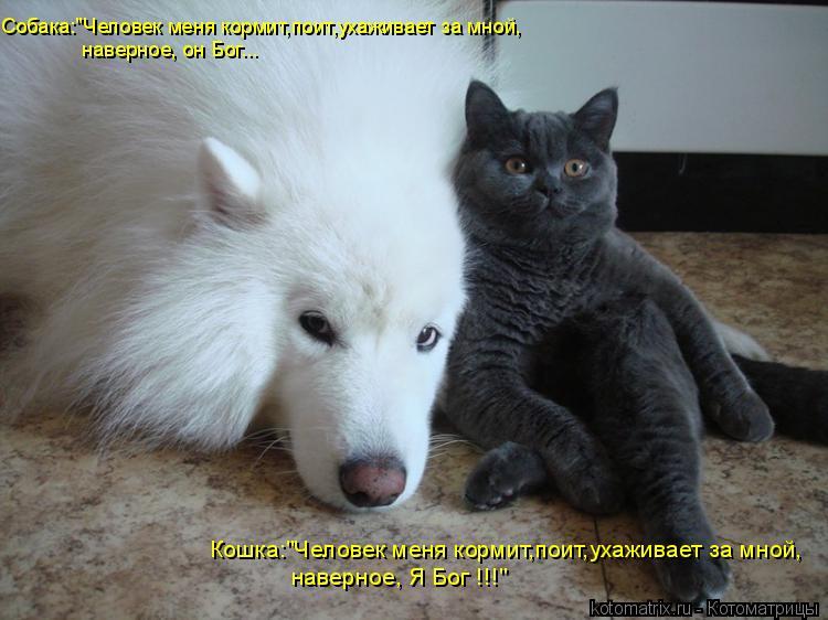 """Котоматрица: Собака:""""Человек меня кормит,поит,ухаживает за мной, наверное, он Бог... Кошка:""""Человек меня кормит,поит,ухаживает за мной, наверное, Я Бог !!!"""""""