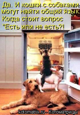 """Котоматрица: Да. И кошки с собаками """"Есть или не есть?! Когда стоит вопрос могут найти общий язык."""