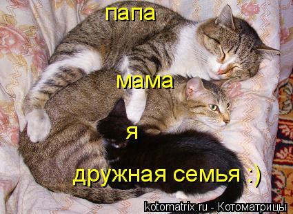 Котоматрица: папа мама я дружная семья :)