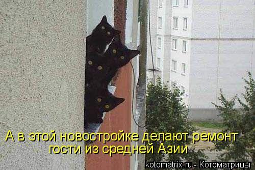 Котоматрица: А в этой новостройке делают ремонт гости из средней Азии