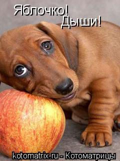 Котоматрица: Яблочко! Дыши!