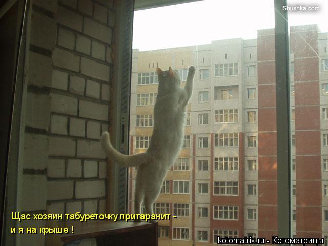 Котоматрица: Щас хозяин табуреточку притаранит -  и я на крыше !