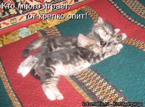 Котоматрица: Кто много играет, тот крепко спит!