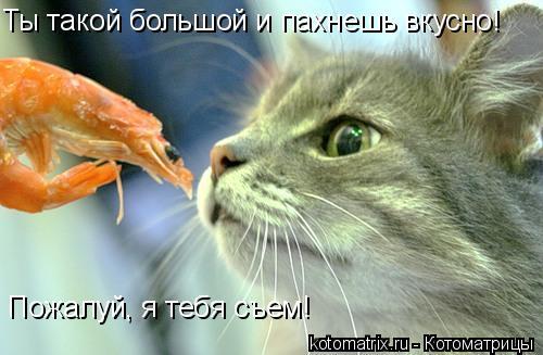 Котоматрица: Ты такой большой и пахнешь вкусно! Пожалуй, я тебя съем!