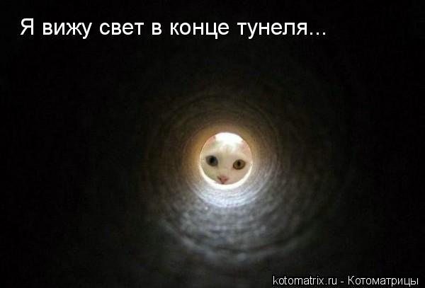 Котоматрица: Я вижу свет в конце тунеля...
