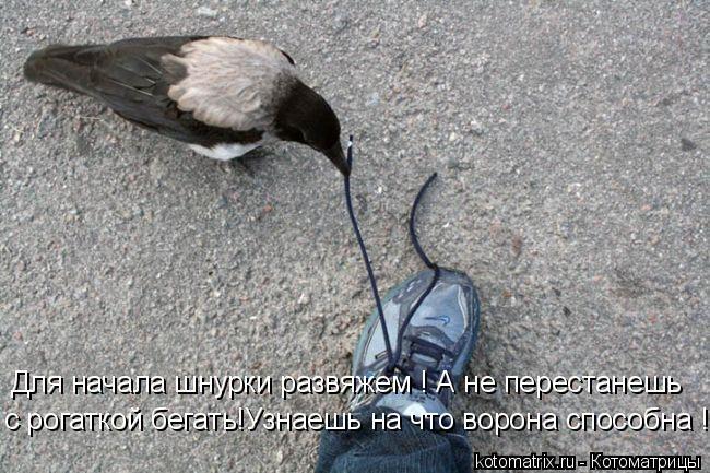 Котоматрица: Для начала шнурки развяжем ! А не перестанешь с рогаткой бегать!Узнаешь на что ворона способна !