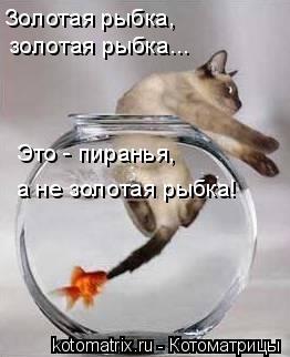 Котоматрица: Золотая рыбка, золотая рыбка... Это - пиранья, а не золотая рыбка!
