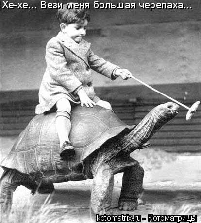 Котоматрица: Хе-хе... Вези меня большая черепаха...