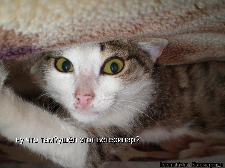 Котоматрица: ну что там?ушёл этот ветеринар?