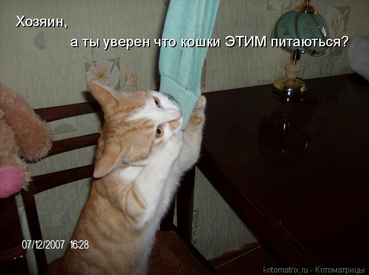 Котоматрица: Хозяин, а ты уверен что кошки ЭТИМ питаються?