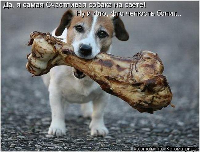 Котоматрица: Да, я самая Счастливая собака на свете! Ну и фто, фто челюсть болит...