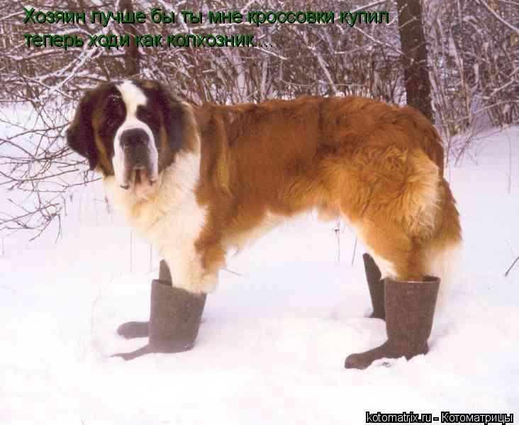 Котоматрица: Хозяин лучше бы ты мне кроссовки купил теперь ходи как колхозник....