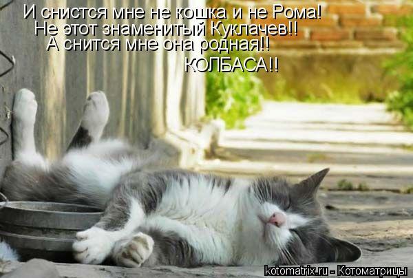 Котоматрица: И снистся мне не кошка и не Рома! Не этот знаменитый Куклачев!! А снится мне она родная!! КОЛБАСА!!