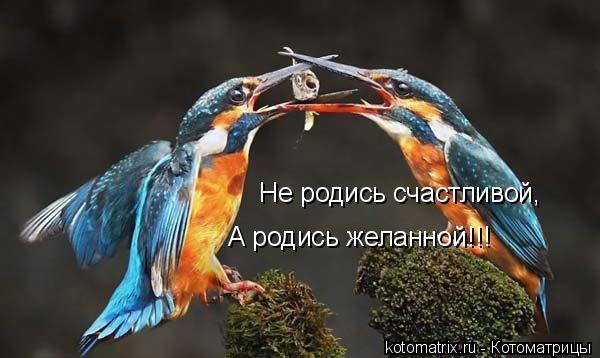 Котоматрица: Не родись счастливой, А родись желанной!!!
