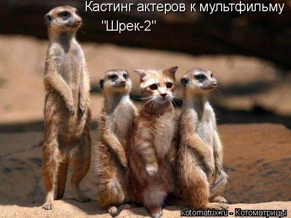 """Котоматрица: Кастинг актеров к мультфильму  """"Шрек-2"""""""