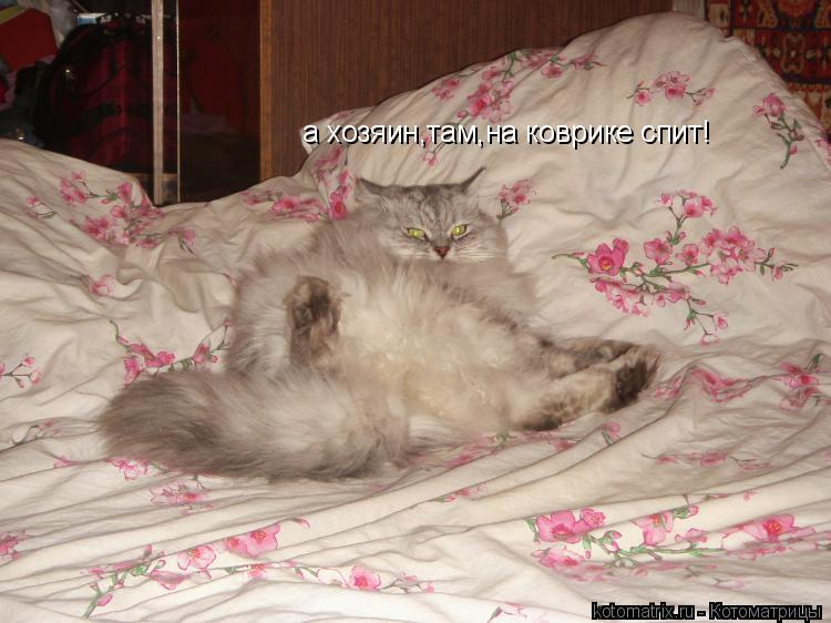 Котоматрица: а хозяин,там,на коврике спит!