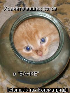 """Котоматрица: Храните ваших котов в """"БАНКЕ"""""""