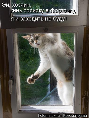 Котоматрица: Эй, хозяин,  кинь сосиску в форточку, я и заходить не буду!