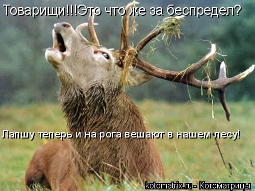 Котоматрица: Товарищи!!!Это что же за беспредел? Лапшу теперь и на рога вешают в нашем лесу!