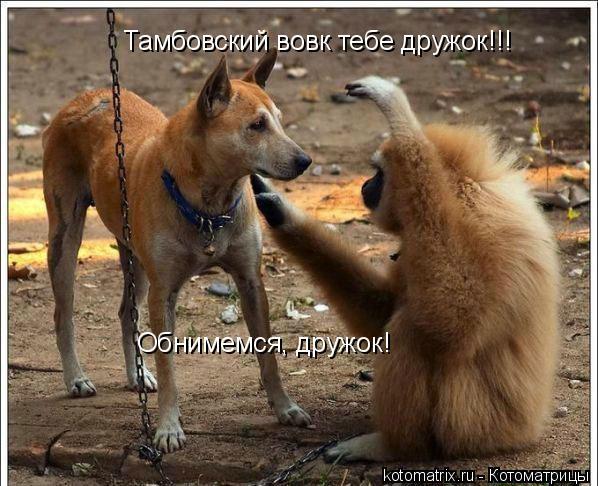 Котоматрица: Обнимемся, дружок! Тамбовский вовк тебе дружок!!!