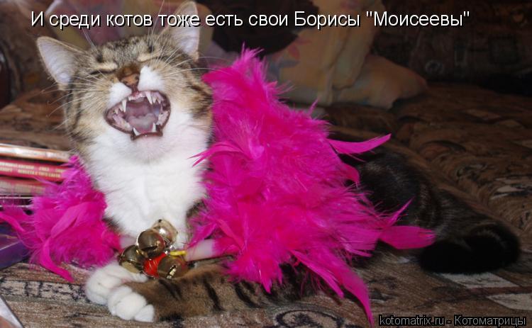 """Котоматрица: И среди котов тоже есть свои Борисы """"Моисеевы"""""""