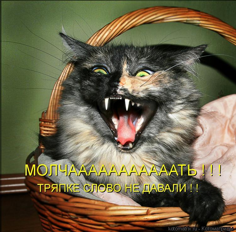 Котоматрица: ТРЯПКЕ СЛОВО НЕ ДАВАЛИ ! ! МОЛЧАААААААААААТЬ ! ! !