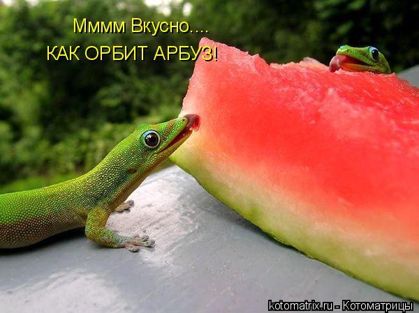 Котоматрица: Мммм Вкусно.... КАК ОРБИТ АРБУЗ!