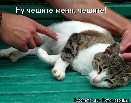 Котоматрица: Ну чешите меня, чешите!