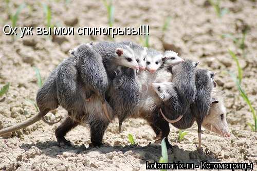 Котоматрица: Ох уж вы мои спиногрызы!!!