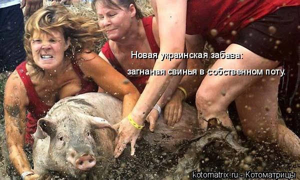 Котоматрица: Новая украинская забава:  загнаная свинья в собственном поту.
