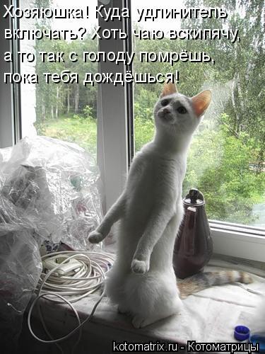 Котоматрица: Хозяюшка! Куда удлинитель  включать? Хоть чаю вскипячу, а то так с голоду помрёшь, пока тебя дождёшься!