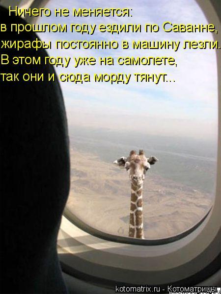 Котоматрица: Ничего не меняется: жирафы постоянно в машину лезли. В этом году уже на самолете, так они и сюда морду тянут... в прошлом году ездили по Саванн