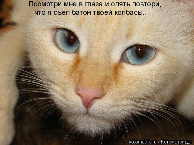 Котоматрица: Посмотри мне в глаза и опять повтори, что я съел батон твоей колбасы...