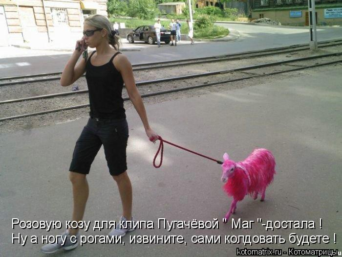 """Котоматрица: Розовую козу для клипа Пугачёвой """" Маг """"-достала ! Ну а ногу с рогами, извините, сами колдовать будете !"""