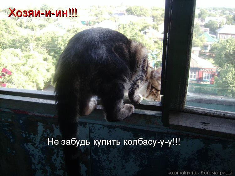 Котоматрица: Не забудь купить колбасу-у-у!!! Хозяи-и-ин!!!