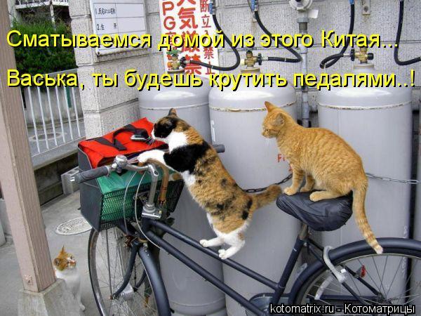 Котоматрица: Васька, ты будешь крутить педалями..! Сматываемся домой из этого Китая...